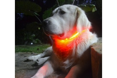 Light up LED glow collar large